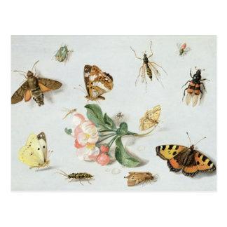 Mariposas, polillas y otros insectos postal