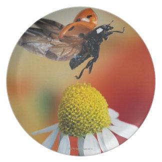 mariquita en la flor platos de comidas