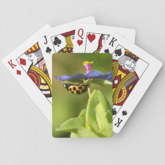 Mariquita en la flor salvaje azul baraja de cartas