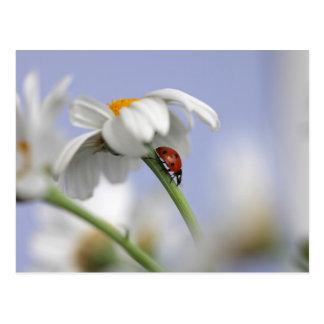 Mariquita en la flor postal