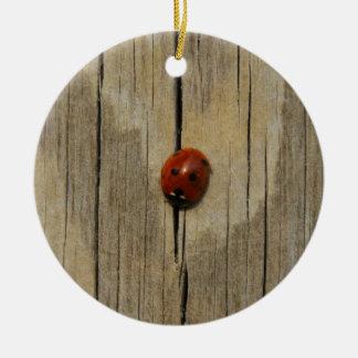 Mariquita en la madera adorno redondo de cerámica