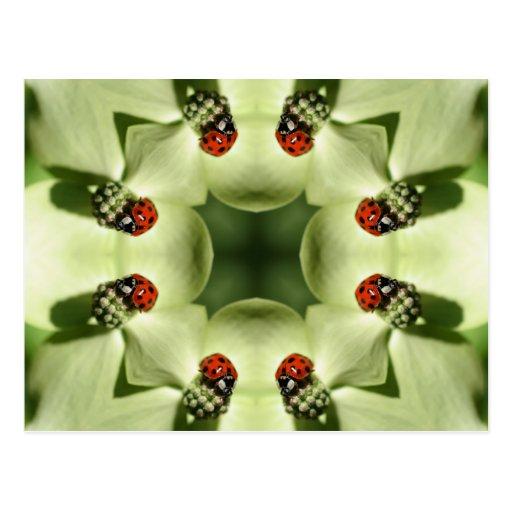 Mariquita en la postal del arte del caleidoscopio