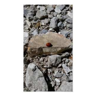 Mariquita en las rocas póster