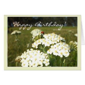 Mariquita en los wildflowers blancos tarjeta de felicitación