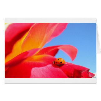 Mariquita en tarjeta color de rosa
