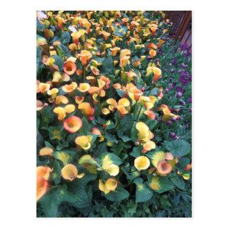 Mariquita G ÚNICO de la flor del jardín de la Postal