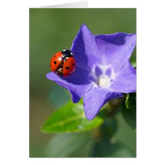 Mariquita hermosa en tarjeta de felicitación del b