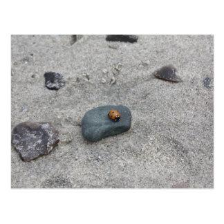 Mariquita playa postal
