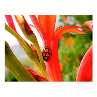 mariquita y flor rojas inmóviles postal