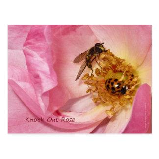 Mariquita y mosca en un golpe hacia fuera subió postal