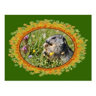 Marmota alpina que come la flor en el marco de hoj postal