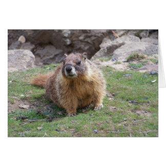 Marmota Tarjeta