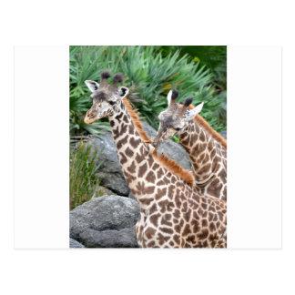 Masaje de la jirafa postal
