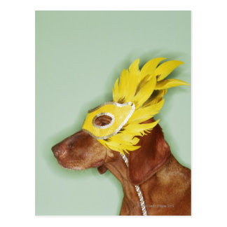 Máscara que lleva del perro postal