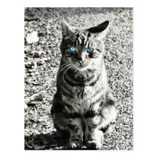 Mascota animal del gato postal