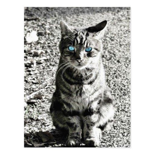 Mascota animal del gato postales