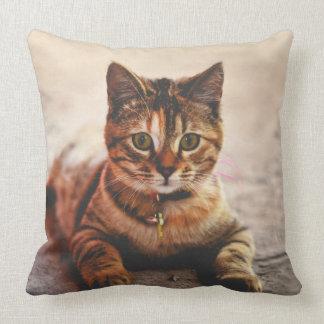 Mascota joven lindo del gatito del gatito del gato cojín decorativo