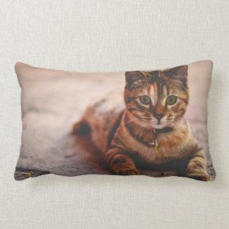 Mascota joven lindo del gatito del gatito del gato cojín lumbar