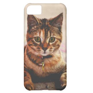 Mascota joven lindo del gatito del gatito del gato funda para iPhone 5C