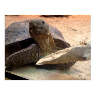 Materia amistosa del diseñador de la tortuga del postal