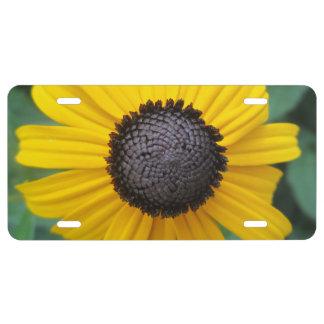 Matrícula Flor Gloriosa del jardín de la margarita