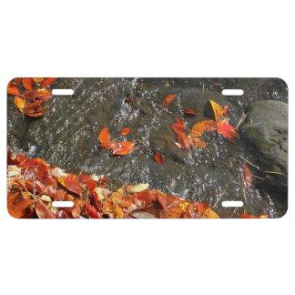 Matrícula Hojas de la caída en fotografía del otoño de la