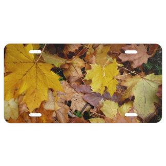 Matrícula Naturaleza amarilla caida del otoño de las hojas