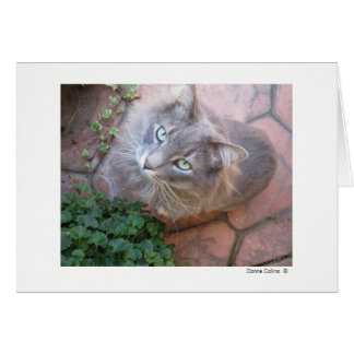 Máximo el gato   #-3 tarjeta pequeña