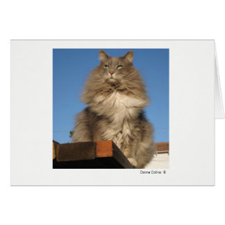 Máximo el gato   #-4 tarjeta pequeña
