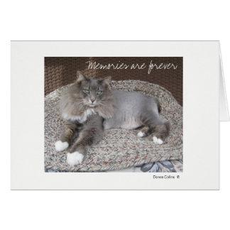 Máximo la tarjeta de nota del gato