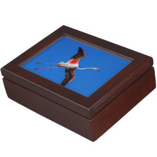 Mayor flamenco, roseus del phoenicopterus caja de recuerdos