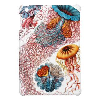 Medusas de Ernst Haeckel Discomedusae