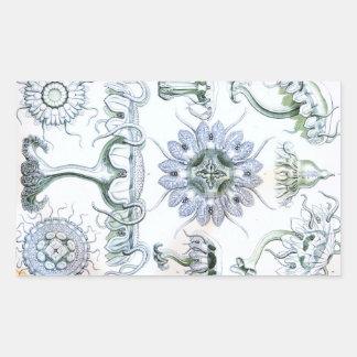 Medusas de Ernst Haeckel Discomedusae Pegatina Rectangular