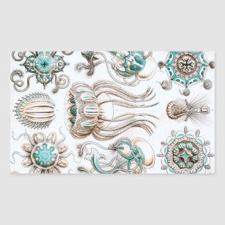 ¡Medusas de Ernst Haeckel Narcomedusae! Pegatina Rectangular