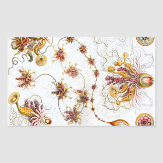 Medusas de Ernst Haeckel Siphonophorae Pegatina Rectangular