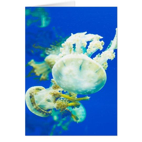 Medusas debajo de la tarjeta de nota del saludo
