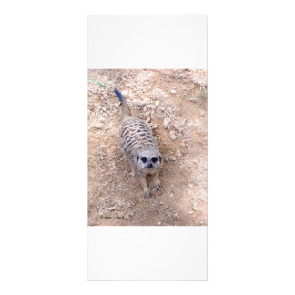 Meerkat contra la arcilla que mira para arriba la  plantilla de lona