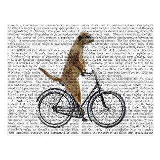 Meerkat en la bicicleta postal
