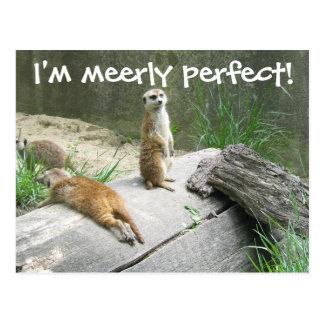 Meerkat simplemente perfecto postal