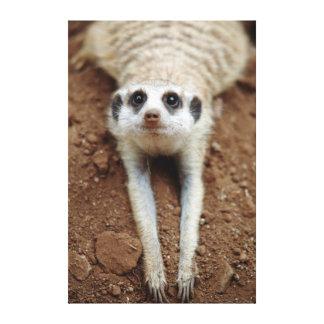 Meerkat (Suricata Suricatta) que se refresca abajo Lona Envuelta Para Galerías