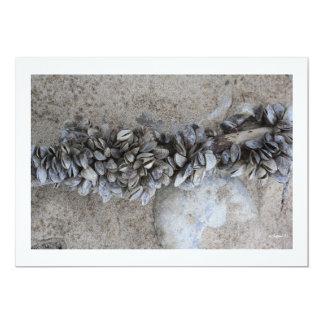 Mejillones de cebra invitación 12,7 x 17,8 cm