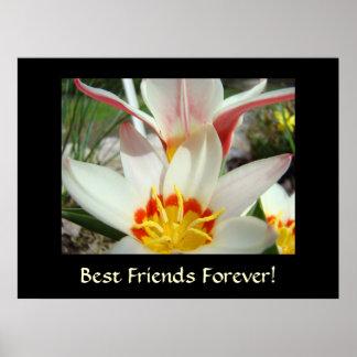 ¡MEJORES AMIGOS PARA SIEMPRE! El tulipán florece i Poster
