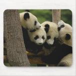 Melanoleuca) del Ailuropoda del bebé de la panda g Alfombrilla De Ratón