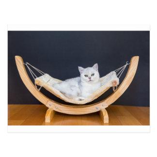 Mentira blanca del gato perezosa en hamaca postal