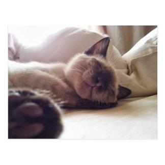 Mentira de los gatitos el dormir Let Postal
