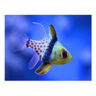 Mercancía del Cardinalfish del pijama Postal