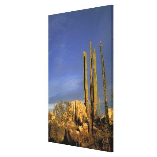 México, Baja del Norte, nacional 2 del desierto de Lona Envuelta Para Galerias