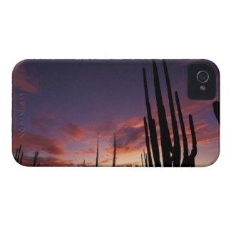 México, Baja del Norte, nacional 3 del desierto de Case-Mate iPhone 4 Coberturas