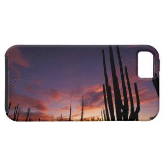 México, Baja del Norte, nacional 3 del desierto de iPhone 5 Cobertura