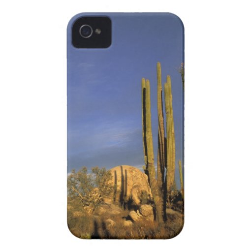 México, Baja del Norte, nacional del desierto de C iPhone 4 Case-Mate Funda
